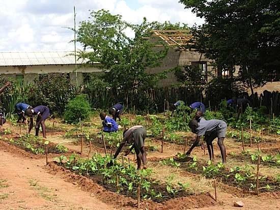 Dopota Garden Project 3